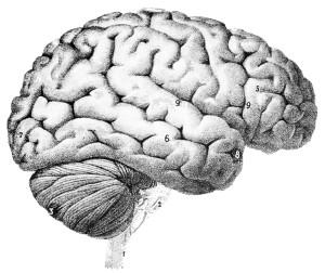 Hjerne